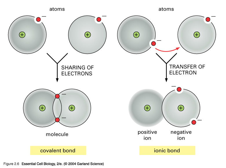 Ionic Compound Model Different Types...